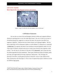 HUMANS & THE ENVIRONMENT: MITOSIS